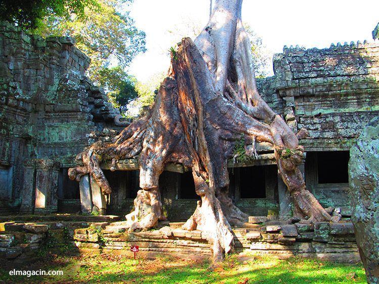 Templo de Ta Prohm en Angkor. Qué ver en Camboya