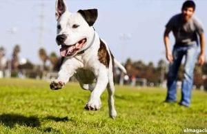 Adiestramiento canino de cachorros en 5 sencillos pasos