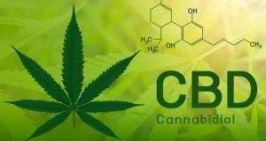 cbd-que-es-y-para-que-sirve-el-aceite-cbd-cannabidiol-que-se-vende-hoy