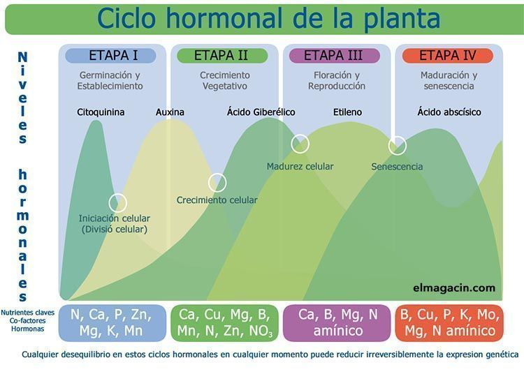 Ciclo hormonal de las plantas. El Magacín.