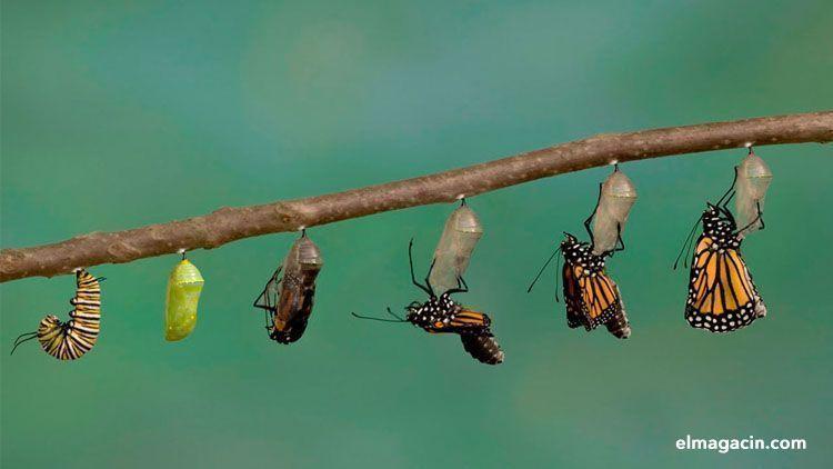 Cómo reinventarse y no morir en el intento. El Magacín.