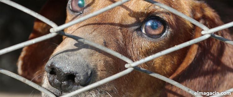 Maltrato animal en España en 2020