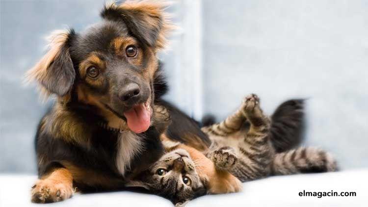 Perros y gatos. Mascotas en el hogar. El Magacín.