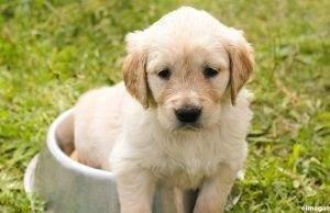 6 razones por las que comprar un pienso personalizado para tu perro